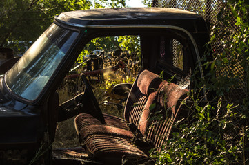 Old abandoned pickup truck cab with plants growing around