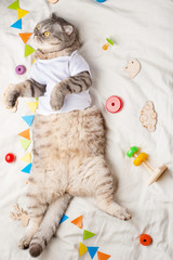 Cute Kitten, on a light background with children's toys, and a pacifier. Advertising picture for pet stores, and zoo clothes