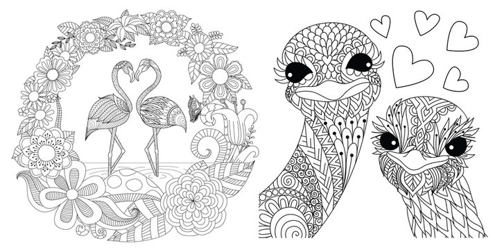 Flamingos and ostriches couples set for card, invitation and coloriing book,coloring page or colouring picture. Vector illustration