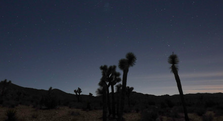 Night Photo of Joshua Trees Against Sky
