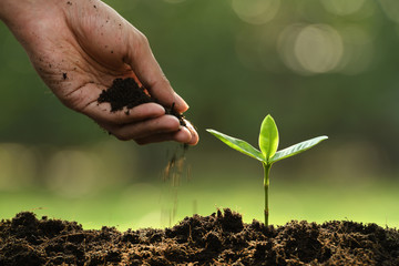 Hand putting soil around young plant on nature background