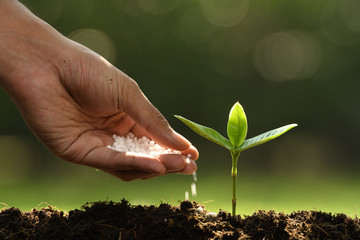 Hand giving chemical fertilizer to young plant on nature background
