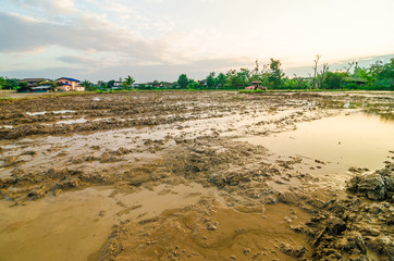 Rice plantation field prepare soil for agricultural industry