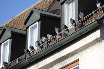 Group of happy wild Zebra Dove Having a Nap while Sunbathing at the Balcony during winter season, wild life backgrounds