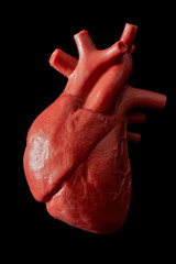 Cardiology, organ transplant and cardiovascular medicine concept with a plastic medical model of a heart isolated on black background with high contrast lighting and a clip path cutout