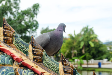 Pigeons that take a break while traveling.