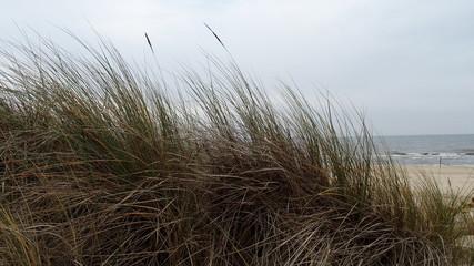 Gräser vor Meer Fotoväggar