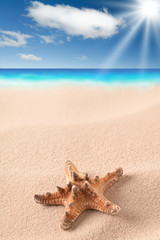 sea starfish on sandy beach. Star fish in sand with clouds and sea in background. Summer holiday vacation.
