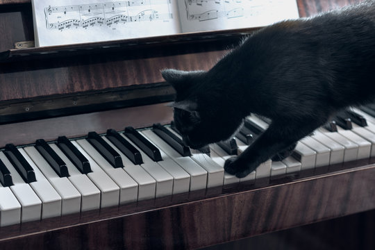 Cheerful black cat walks on the piano keys and tries to play the piano, the cat studies the notes and playing a musical instrument.