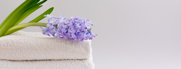 Beige and white bath towels and a fresh violent hyacinth, banner
