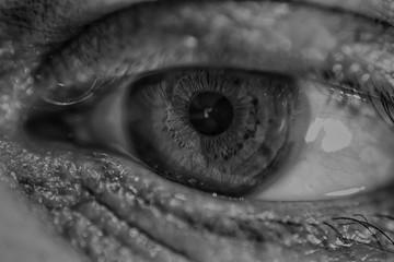 human eye macro photo