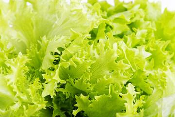 Closeup fresh green lettuce leaves. Light nature eco food background.