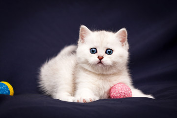 Playful white British kitten with blue eyes staring at the camera playing with a pink ball