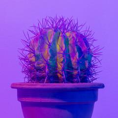 Purple Neon creative cactus. Cactus minimal design. Cactus fashion idea
