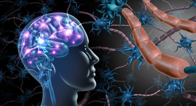 Brain Nerve Cells