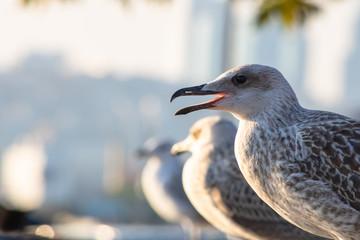 seagulls on rock