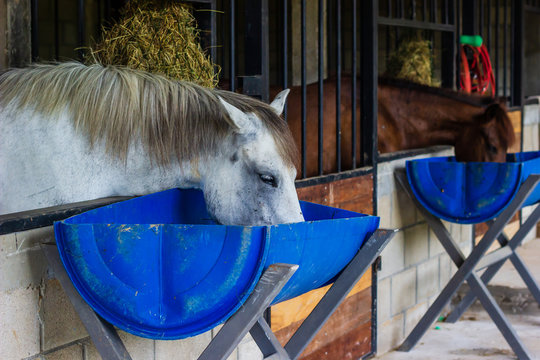 horse eating feed out of a rubber pan