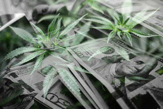 Marijuana Industry Profits With Money In Black & White With Cannabis Leaves