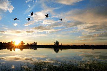 Scenic - Waterfowl