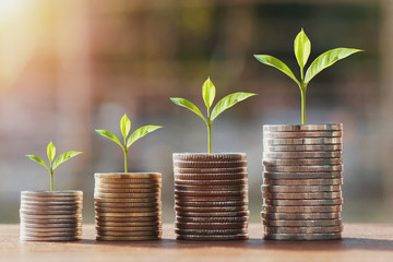 money stack and young plant growing step. concept finance accounting
