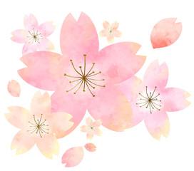 水彩の桜 イラスト