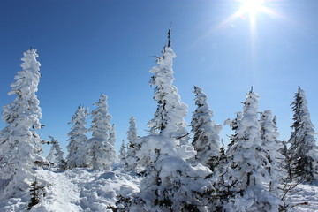Beautiful winter landscape with snow covered trees. Mountain Shoriya. Sheregesh. Russia