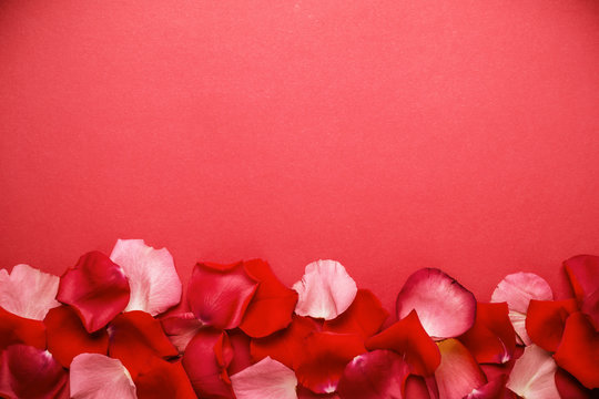Petal of red roses border. Romantic or spa background