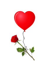 red rose on red heart shaped balloon isolated on white