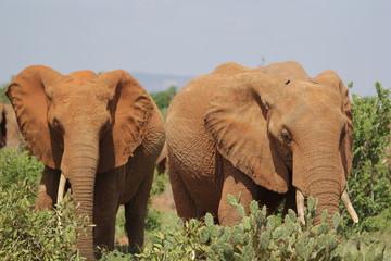 Tsavo East.Kenya