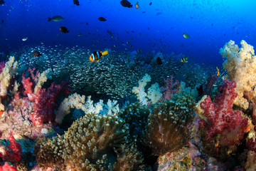 Fotobehang Koraalriffen A beautful, colorful and healthy tropical coral reef (Richelieu Rock, Thailand)
