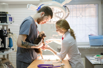 Veterinarians prepare the dog for surgery. Operating room with medical equipment in a veterinary clinic. Table for surgical operations in the hospital.