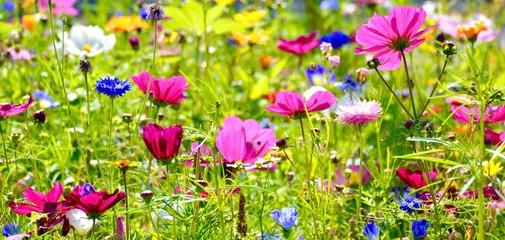 Wall Mural - Blumenwiese im Sommer - Hintergrund Panorama - Wildblumen Blumen Wiese