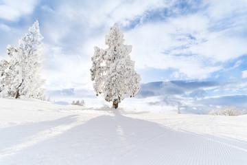 山形蔵王の樹氷 Snow rime in Yamagata Zao,Japan
