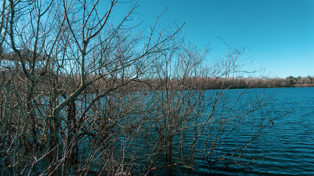 Branches of the lake