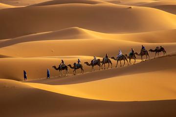 Poster Kameel Camels in desert