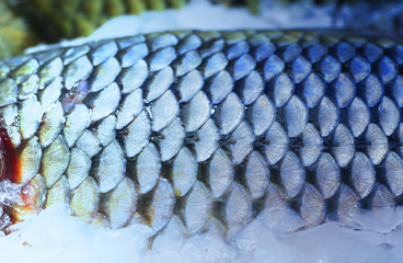 Photo of beautiful macro of large fish scales
