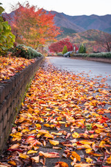 Low angle view on a park path in the morning after rain, with fallen autumn leaves in the foreground and hills and colorful trees in the background at Fujikawaguchiko, Japan.