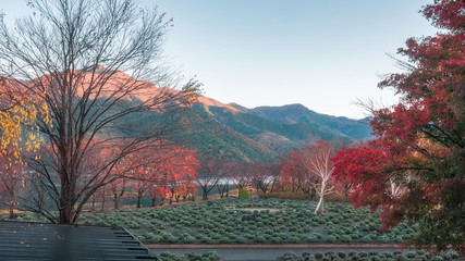 Garden on the side of Lake Kawaguchi, Japan, early in the morning with a partial sunlit mountain in the background and colorful  trees with autumn foliage in the foreground.