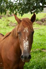 Cavalo IMG_8428