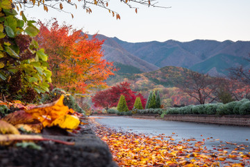 Low angle view on a park path in the morning after rain, with fallen autumn leaves and hills and colorful trees in the background at Fujikawaguchiko resort town, on the outskirts of Mount Fuji, Japan.