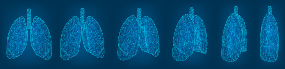 vector set. lungs and bronchi. 3d elements for design