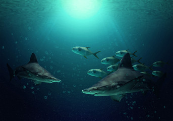 Big sharks and fishes in the clear blue water of Indian ocean