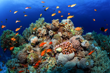 Poster Coral reefs Coral reefs Red Sea. General plan underwater.