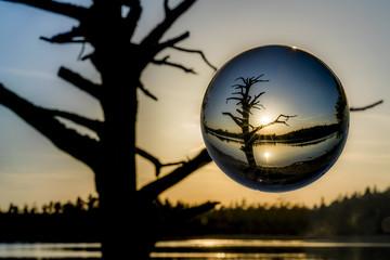 Toter Baum am Fohnsee bei Iffeldorf in einer Glaskugel gefangen