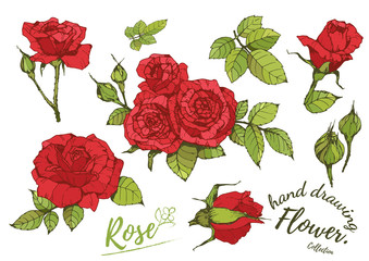 Red vector roses and green leave elements set isolated on the white background for floral decoration