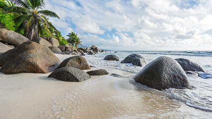 beautiful palms at wild tropical beach anse marie-louise,seychelles 21