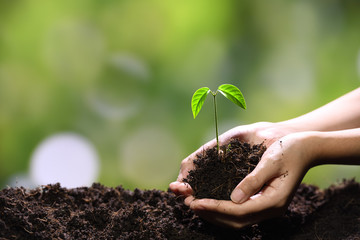 Hands holding and caring a green young plant