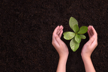 People's hands cupping protectively around young plant