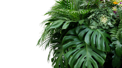 Monstera and tropical leaves foliage plant bush floral arrangement nature backdrop isolated on...