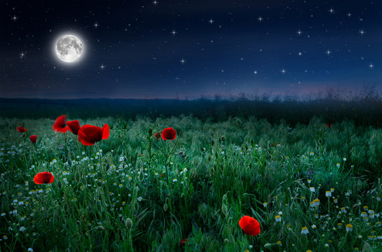 Beautiful poppy field in the night and full moon